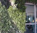 ¡Jardines verticales, urbanos y radicales!   Cultivos Hidropónicos   Scoop.it