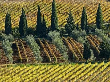 Italian fine wine climbing | Grande Passione | Scoop.it