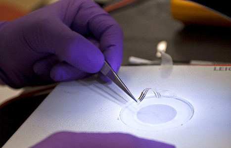 Transistors that wrap around tissues and morph with them | Amazing Science | Scoop.it