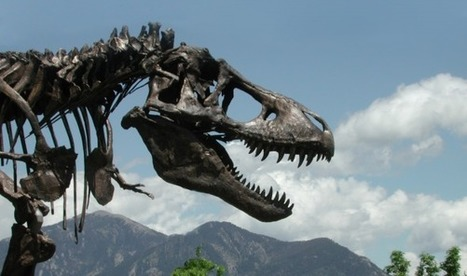 T. Rex Museum Move Stymied | Science and Nature | Scoop.it