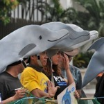 After TRO lapsed, PH dolphins on to Singapore | Earth Island Institute Philippines | Scoop.it