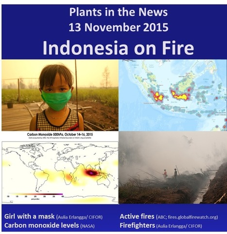 Plants in the News 13 November 2015: Indonesia on Fire | Plant Science Today | Erba Volant - Applied Plant Science | Scoop.it