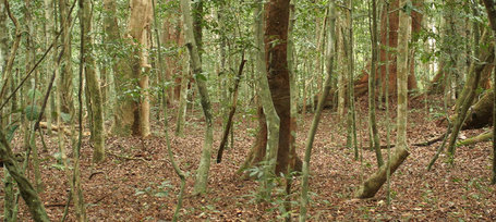 The deforestion of Central Africa: Man or climate? : Past Horizons Archaeology | Archaeology News | Scoop.it