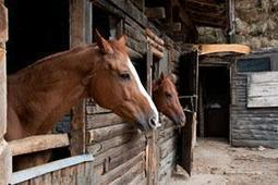 Horses Who Are Afraid of Noises   The Natural Horse   Scoop.it