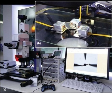 Cooperating High-Precision Robots Manipulate Microparticles under Microscope   Amazing Science   Scoop.it