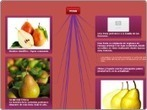 PERA - Mind Map | PERA (PYRUS COMMUNIS) | Scoop.it