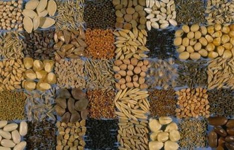 Seeds of discontent: Stomach-turning GMO debate heats up | Global Affairs & Human Geography Digital Knowledge Source | Scoop.it