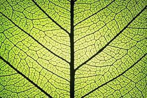 Un stockage d'énergie inspiré des plantes - L'Expansion | Sustain Our Earth | Scoop.it