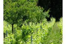 Agroforesterie, les pièges à éviter, Viticulture - Pleinchamp | Chimie verte et agroécologie | Scoop.it