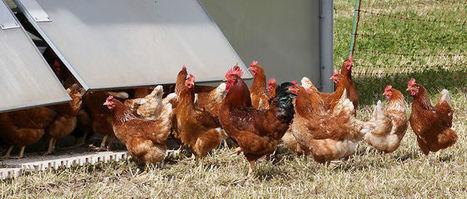 Deux nouveaux cas de grippe aviaire détectés en Dordogne | Toxique, soyons vigilant ! | Scoop.it