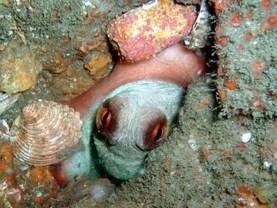 Scuba Diving - Photos | PortugalDreamCoast | Scoop.it