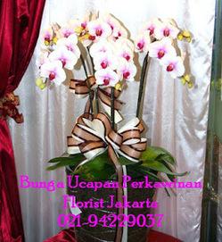 Bunga Anggrek Bulan - Phalaenopsis Orchid   Toko Bunga by Florist Jakarta   Bunga Ucapan Selamat   Scoop.it