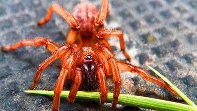 El miedo a las arañas se vence con arañas y realidad virtual | Reflejos | Scoop.it