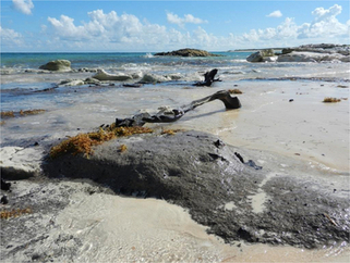 What ecosystem greeted the first human settlers in the northern Caribbean? | Geology | Scoop.it