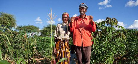 Global Development Program - Bill & Melinda Gates Foundation | DR,Martin luther king | Scoop.it