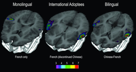 Finding 'Lost' Languages in the Brain | The Brain Might Learn that Way | Scoop.it