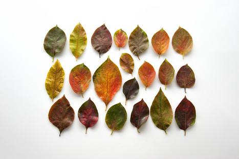 Pourquoi les feuilles d'automne sont rouges, oranges ou jaunes? | Aux origines | Scoop.it