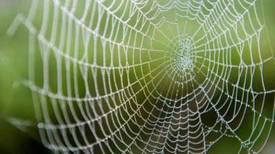 Une araignée mutante inquiète les Etats-Unis | EntomoNews | Scoop.it