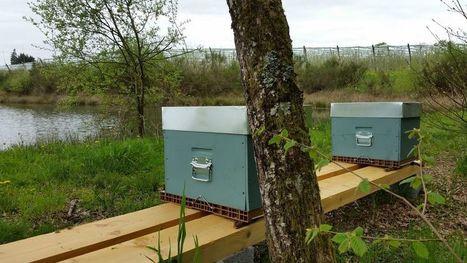Les producteurs de pommes contre-attaquent en Limousin et mettent des ruches à l'année dans les vergers | Agriculture en Dordogne | Scoop.it
