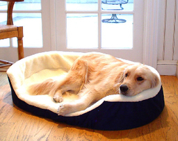Top 5 Tips on Choosing a Pet Bed | Overstock.com | The Dog Blogger | Scoop.it
