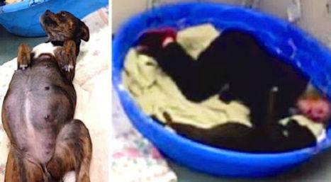 Telecamera notturna controlla cagnolina incinta, ma riprende un gesto inaspettato | My Pet's Hero | Scoop.it
