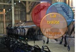 Dossier Traite caprine   SCIENCES DE L'ANIMAL   Scoop.it