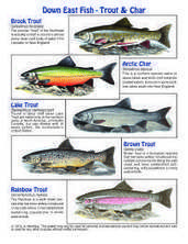 FREE: Downeast Trout & Char poster for your school, group, or camp | TEACHER TEACHER | Scoop.it