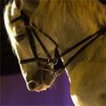Journée Royale a Chambord, spectacle équestre | Domaine national de Chambord | Scoop.it