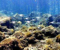Insight into marine life's ability to adapt to climate change   Sustain Our Earth   Scoop.it