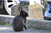 Bunny's Blog: B.C. Government Rules Out Rabbit Sanctuary | Pet News | Scoop.it