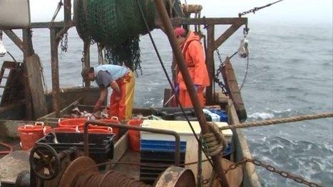 Fishing Industry At Risk Of Disappearing In New England - CBS Local | Fish Habitat | Scoop.it
