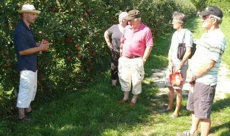 Pourquoi la pomme préfère le bourdon au papillon | Les colocs du jardin | Scoop.it