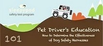 Bunny's Blog: How to Determine the Effectiveness of Dog Safety Harnesses | Pet News | Scoop.it