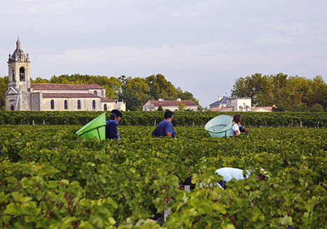Bordeaux 2015 vintage guide - Decanter | Wines of Bordeaux and south-west France | Scoop.it