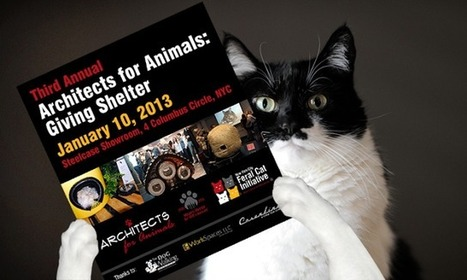 GLOGIRLY: Architects For Animals – Giving Shelter Event | NYC's Animals | Scoop.it