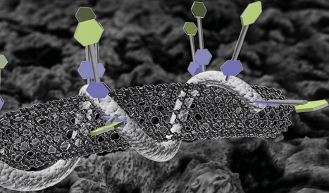 New biosensor melds carbon nanotubes, DNA | KurzweilAI | information analyst | Scoop.it