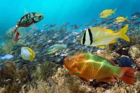 Tropical Fish Are Taking Over Temperate Oceans, Causing Underwater Deforestation | Sustain Our Earth | Scoop.it