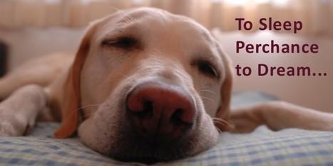 Why Do We Sleep? Sleeping and Sleep Awareness Week | Health Communication and Social Media | Scoop.it
