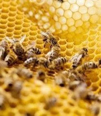 Etats-Unis : Monsanto saisit et détruit illégalement des abeilles reines résistantes au Roundup | Sustain Our Earth | Scoop.it