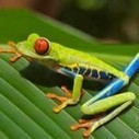 Colorful Costa Rica | Conservation, Ecology, Environment and Green News | Scoop.it