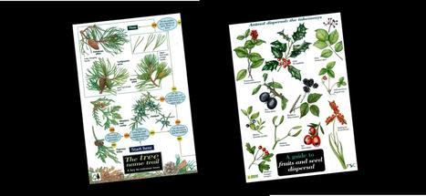 British Bird, Bees, Butterfly, Plant and Garden Bug field Guides UK | Bird Accessories | Scoop.it