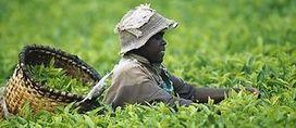 Agriculture familiale : la FAO lance une plateforme numérique | Agricultures familiales | Scoop.it