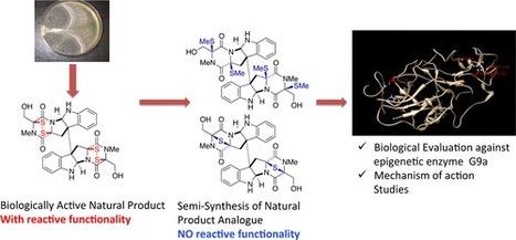 On the Histone Lysine Methyltransferase Activity of Fungal Metabolite Chaetocin | Chemistry | Scoop.it