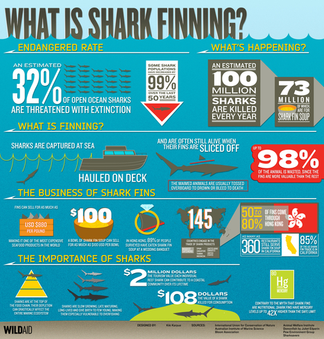 What is Shark Finning? | Infographics for English class | Scoop.it