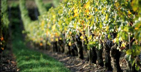 2015 sera-t-il le millésime du siècle ? - Le Figaro Vin | Univers du vin | Scoop.it