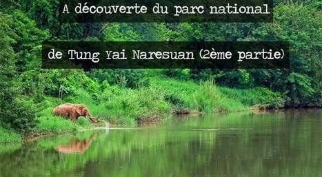 A découverte du parc national de Tung Yai Naresuan (2ème partie) | Voyage Thaïlande-Voyage au pays des merveilles | Scoop.it