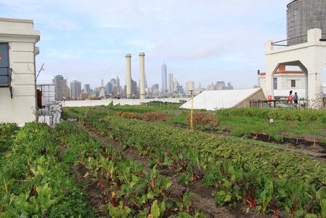 L'agriculture intra-urbaine, une agriculture comme les autres ? | saf agr'iDées | (Culture)s (Urbaine)s | Scoop.it