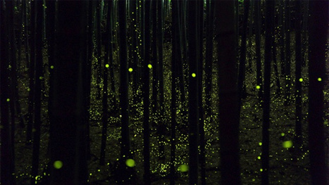 Long-exposure photographs of fireflies create magical forest scenes | What's new in Visual Communication? | Scoop.it