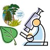 Diagnostic activities for plant pests