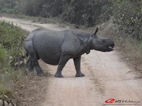 Rhinocéros en Inde | Voyage photographie en Inde | Scoop.it
